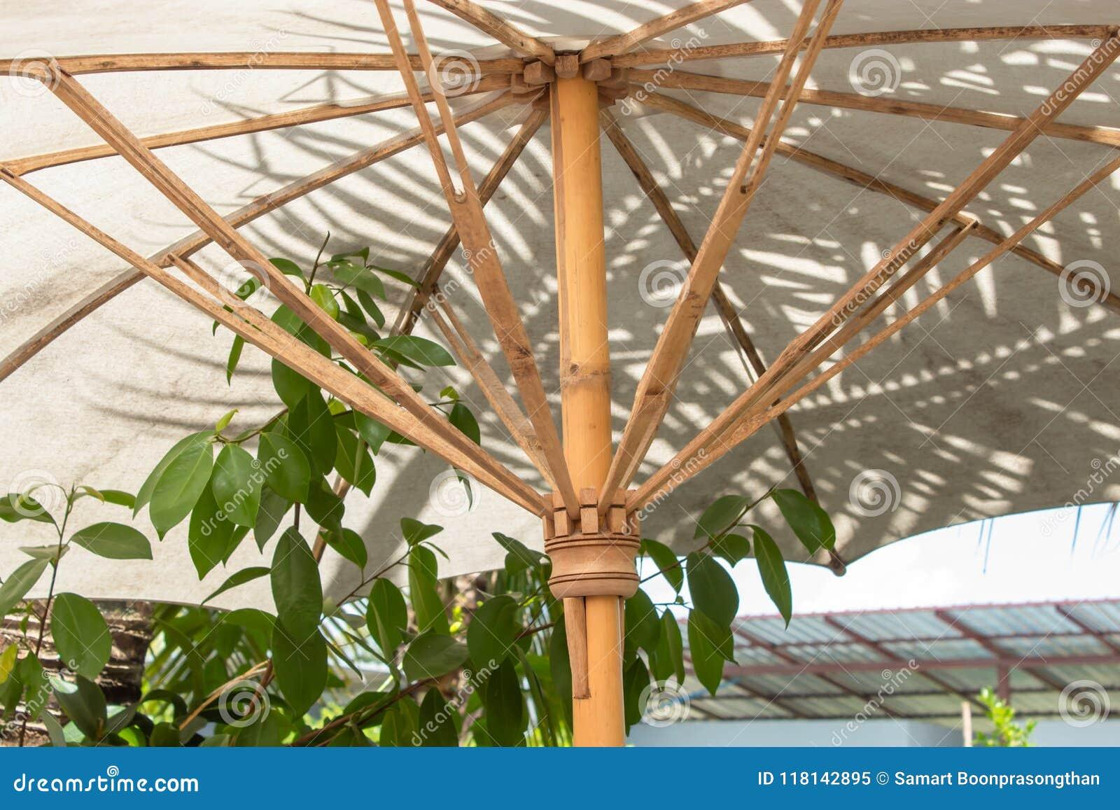 伞由竹茎做成
