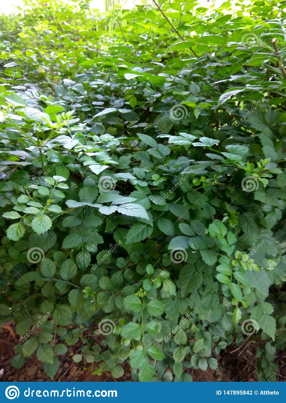 伟大的绿色叶子在公园环境美化