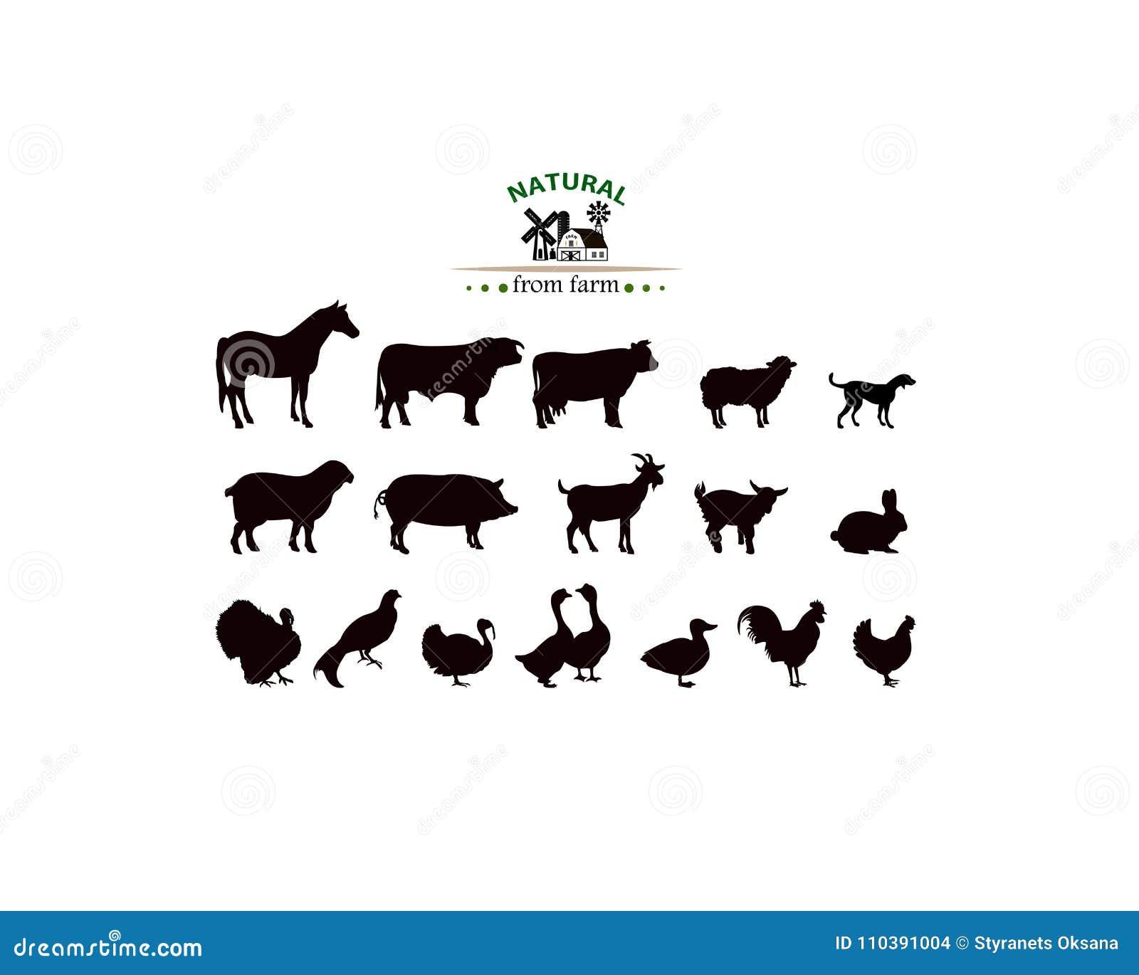 传染媒介在白色隔绝的牲口剪影