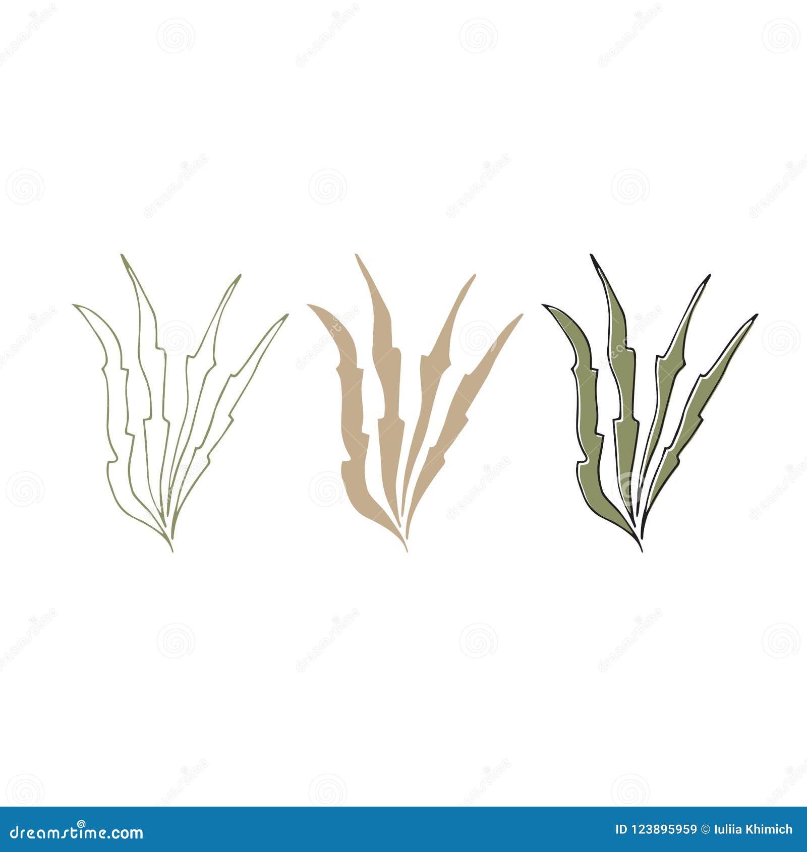 传染媒介手拉的海草 被隔绝的各自的对象,海藻