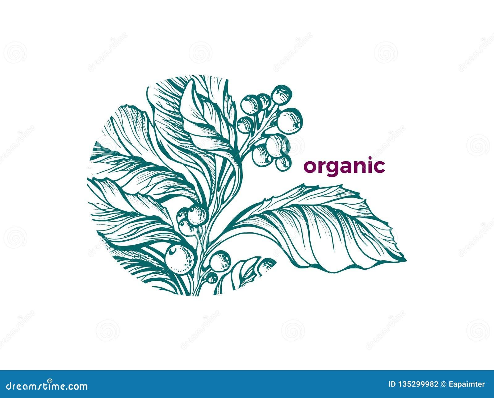 传染媒介有机标志自然设计绿色艺术剪影茶伙伴分支