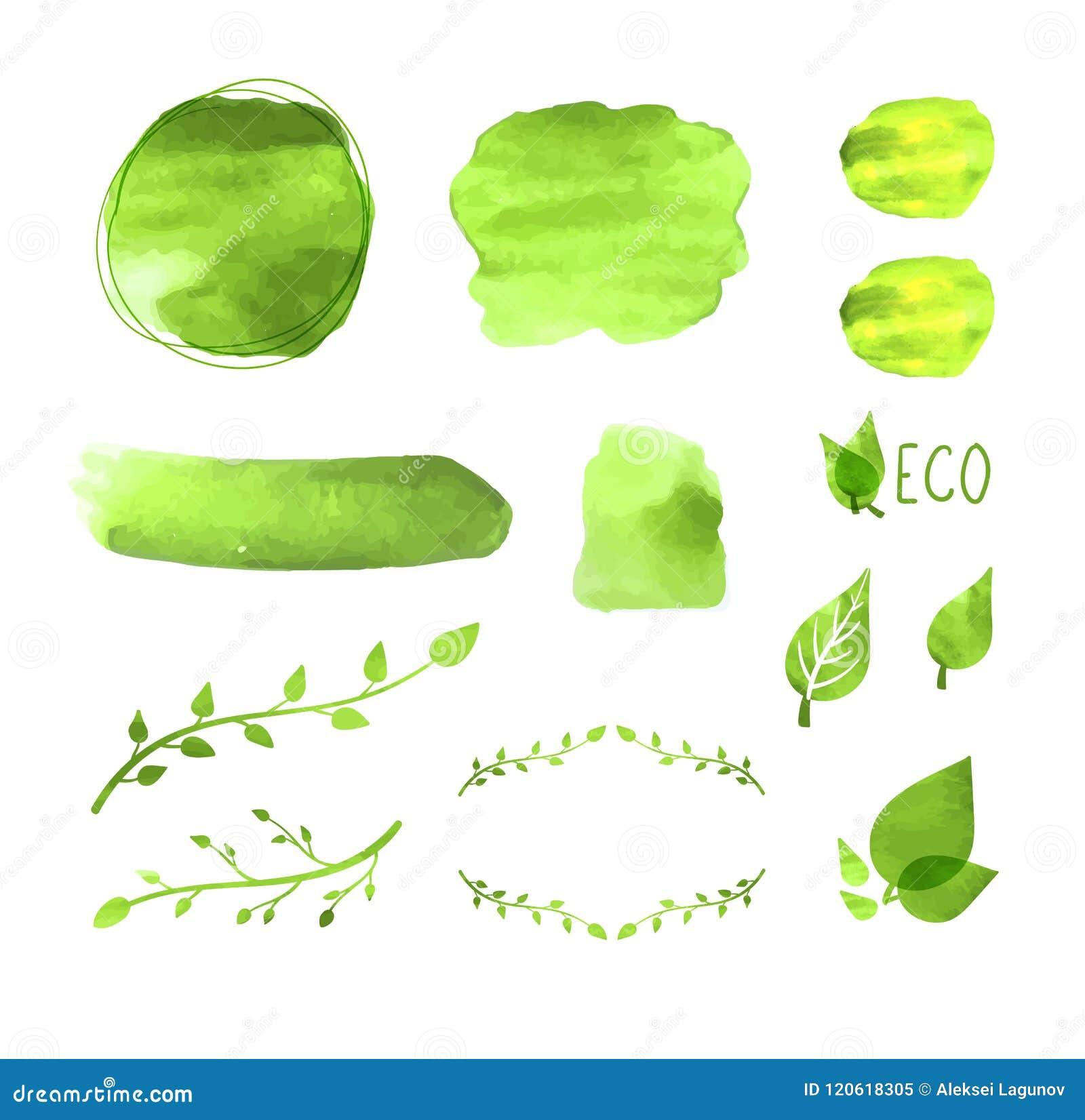 传染媒介水彩被设置的空白框架,植物图画,花卉设计元素,绿色油漆纹理, Eco概念,被隔绝的象