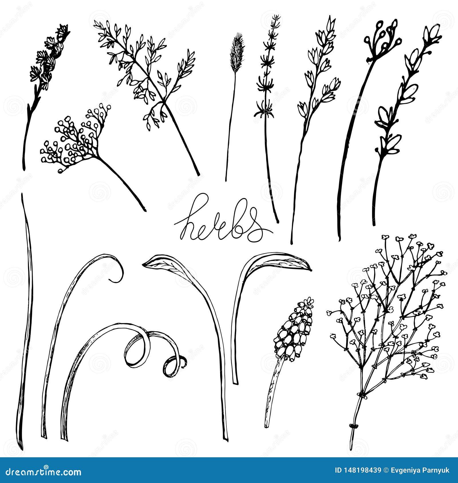 传染媒介花卉例证丝毫草本