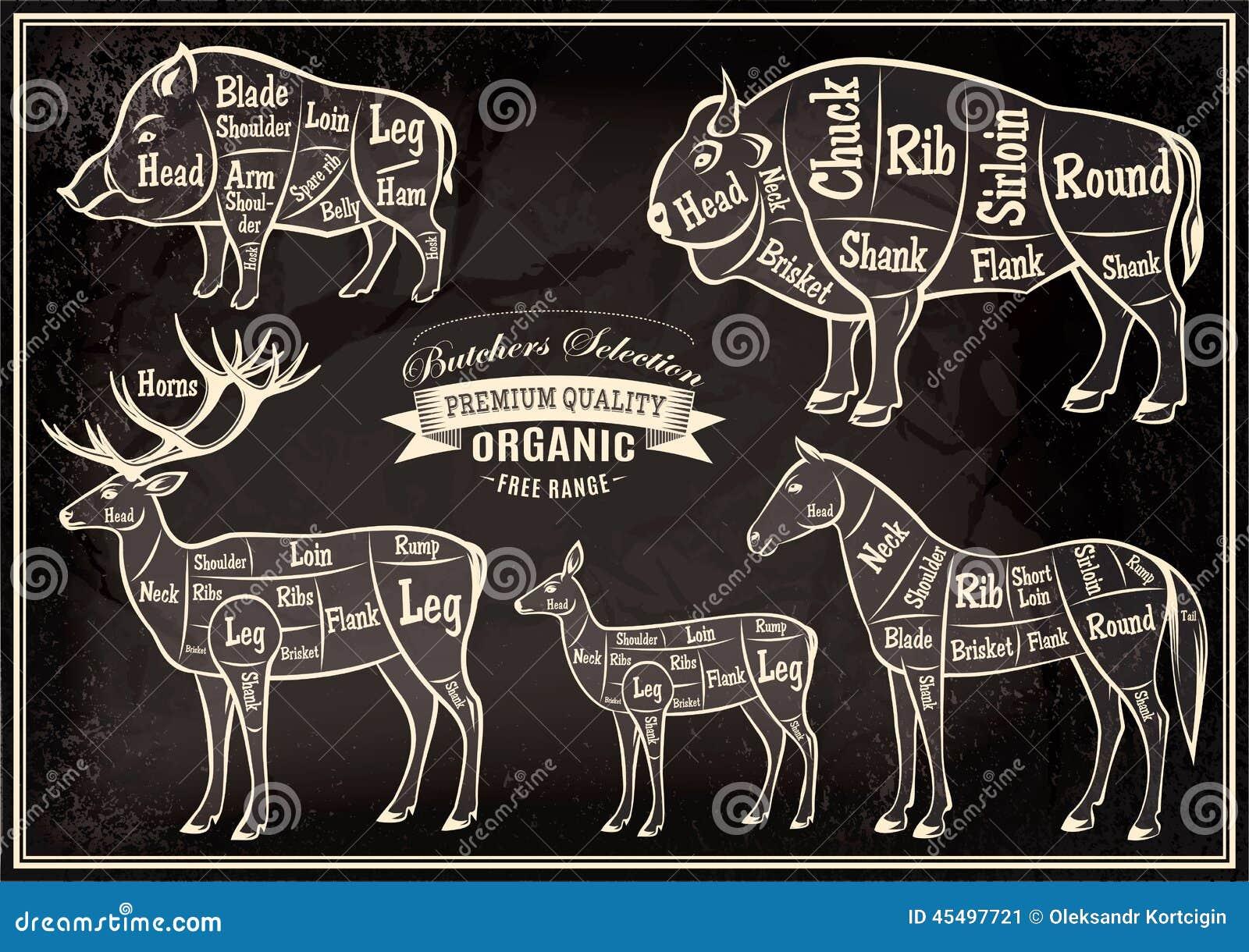 传染媒介图切开了尸体公猪,北美野牛,鹿,马