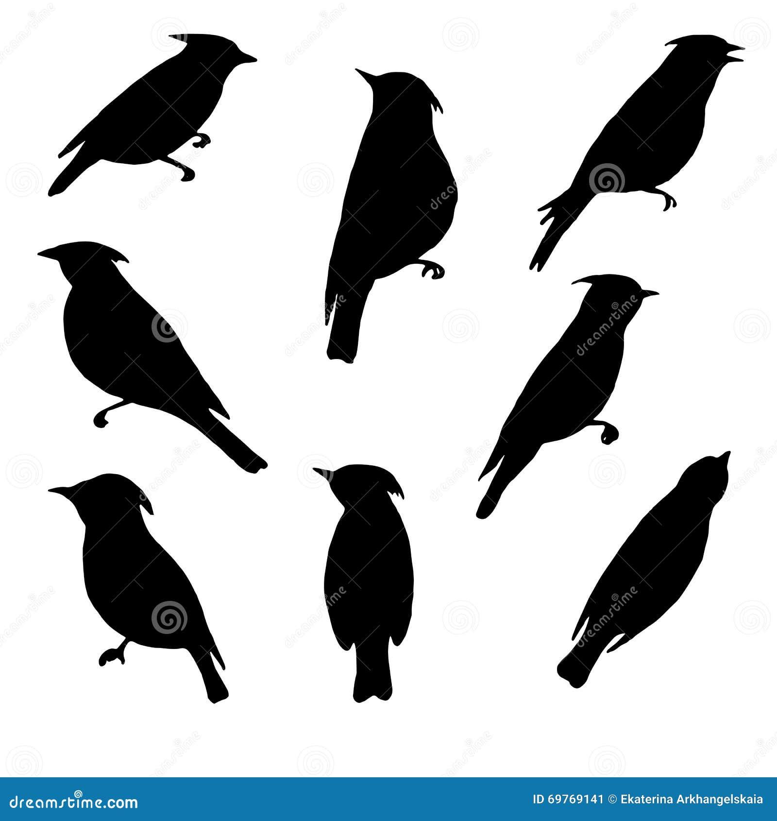 太平鸟,鸟剪影,手拉的歌手,被隔绝的传染媒介元素传染媒介套.