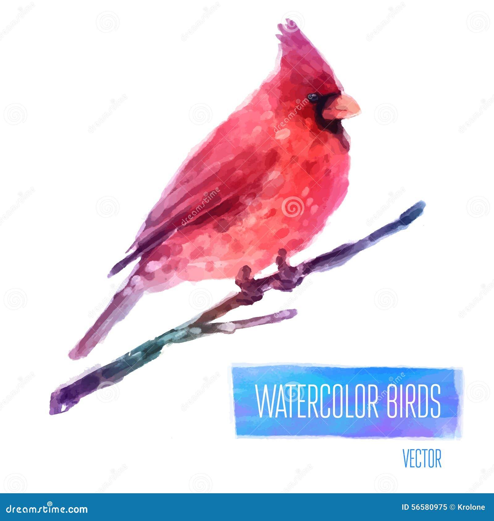 传染媒介水彩在分支手上的鸟主教