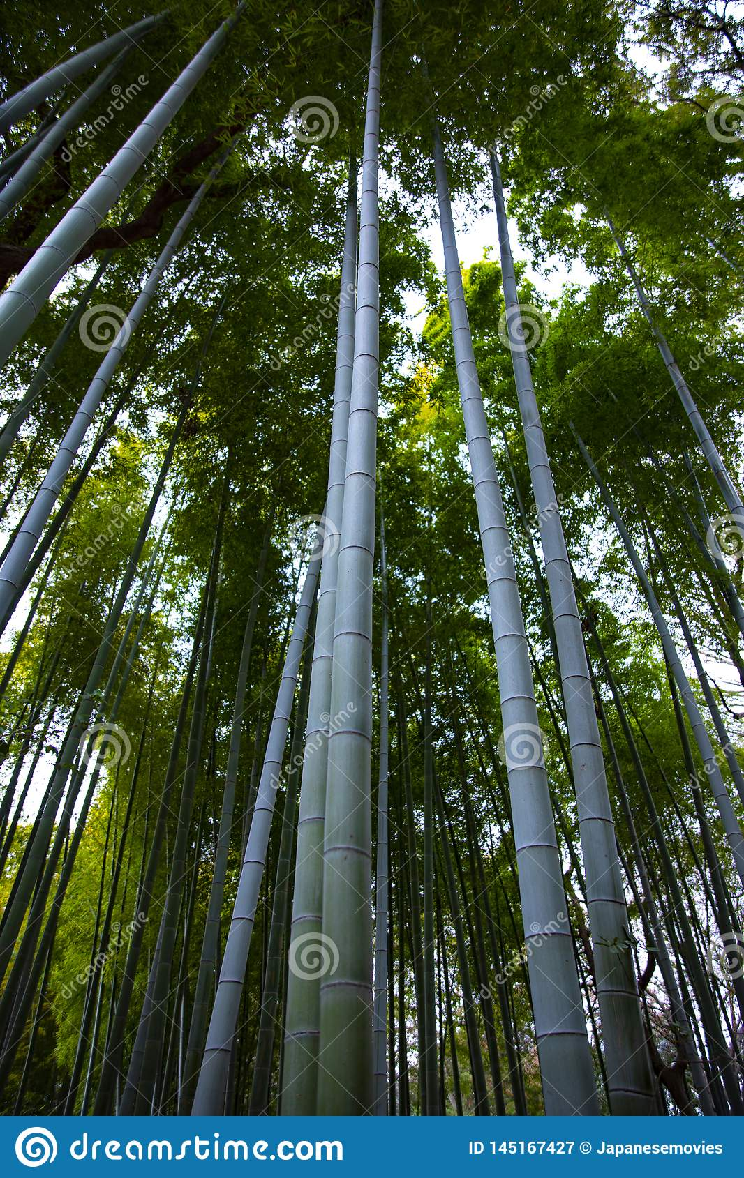 传统公园的竹森林