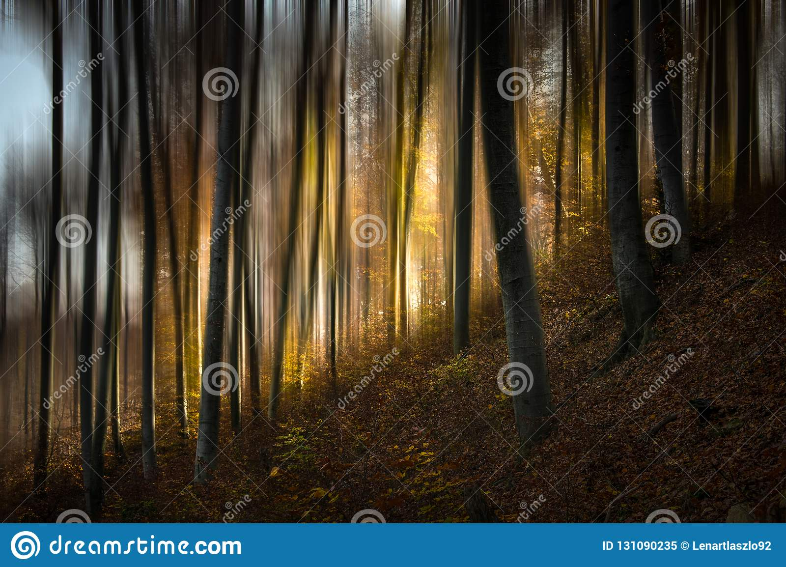 传说森林v
