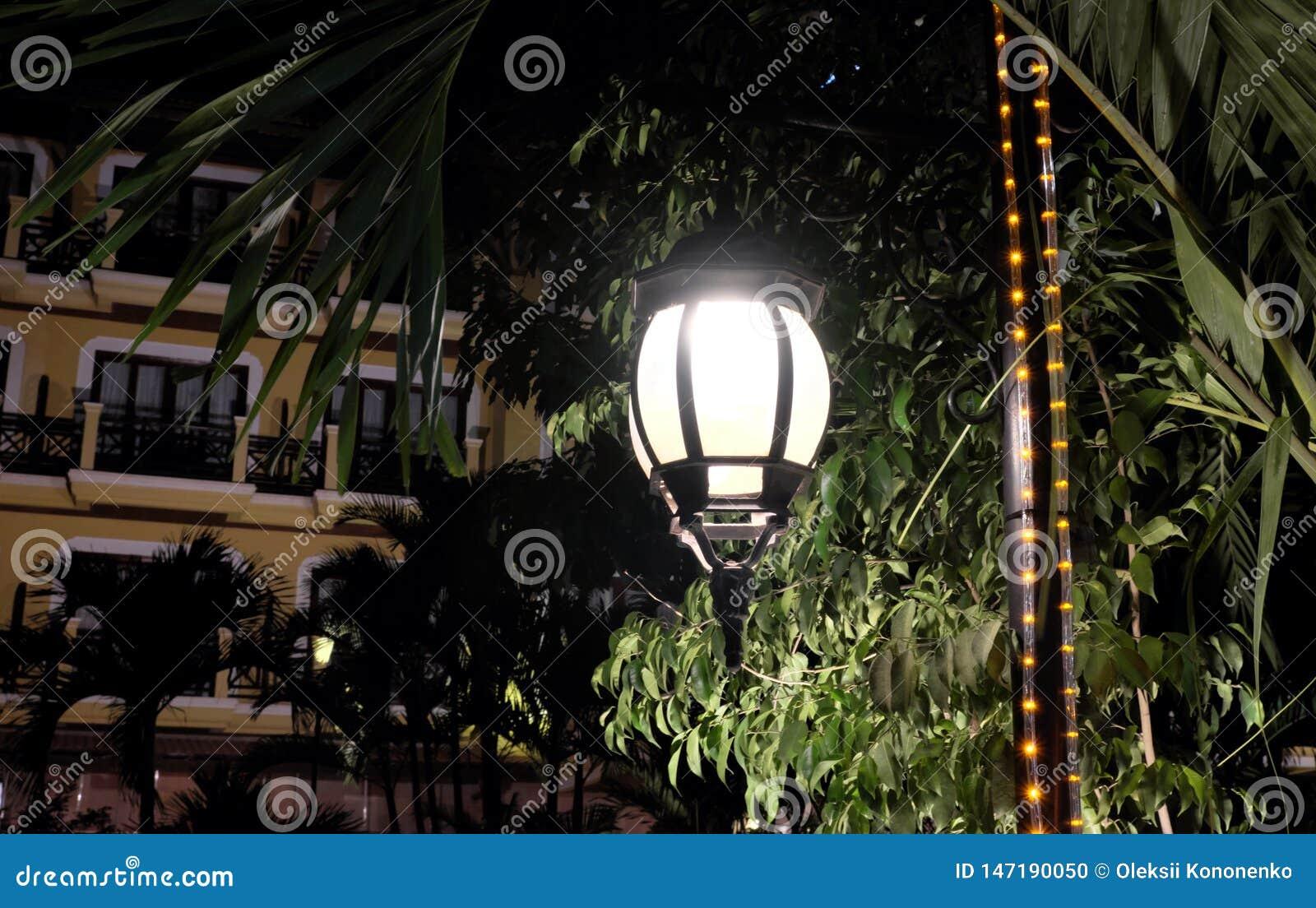 伪造的葡萄酒灯笼照亮树的叶子 发出从街灯的明亮的光