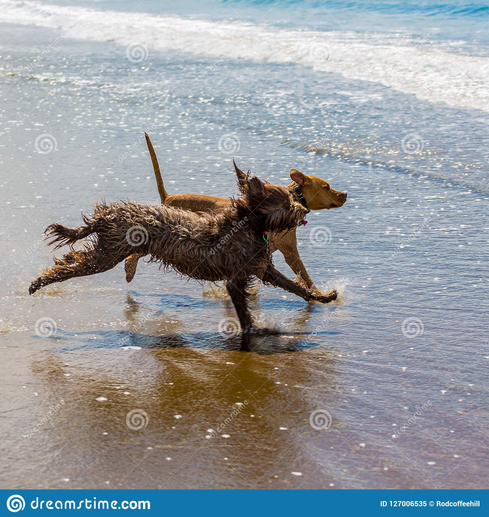 伴侣尾随享受他们的时间在海滩