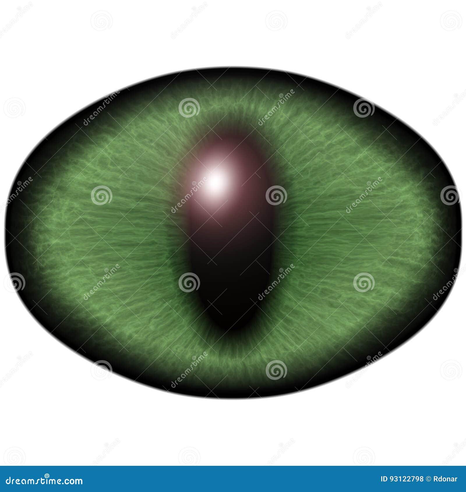 似猫的动物的奇怪的嫉妒与色的虹膜的 详述看法入被隔绝的食肉动物的眼睛电灯泡