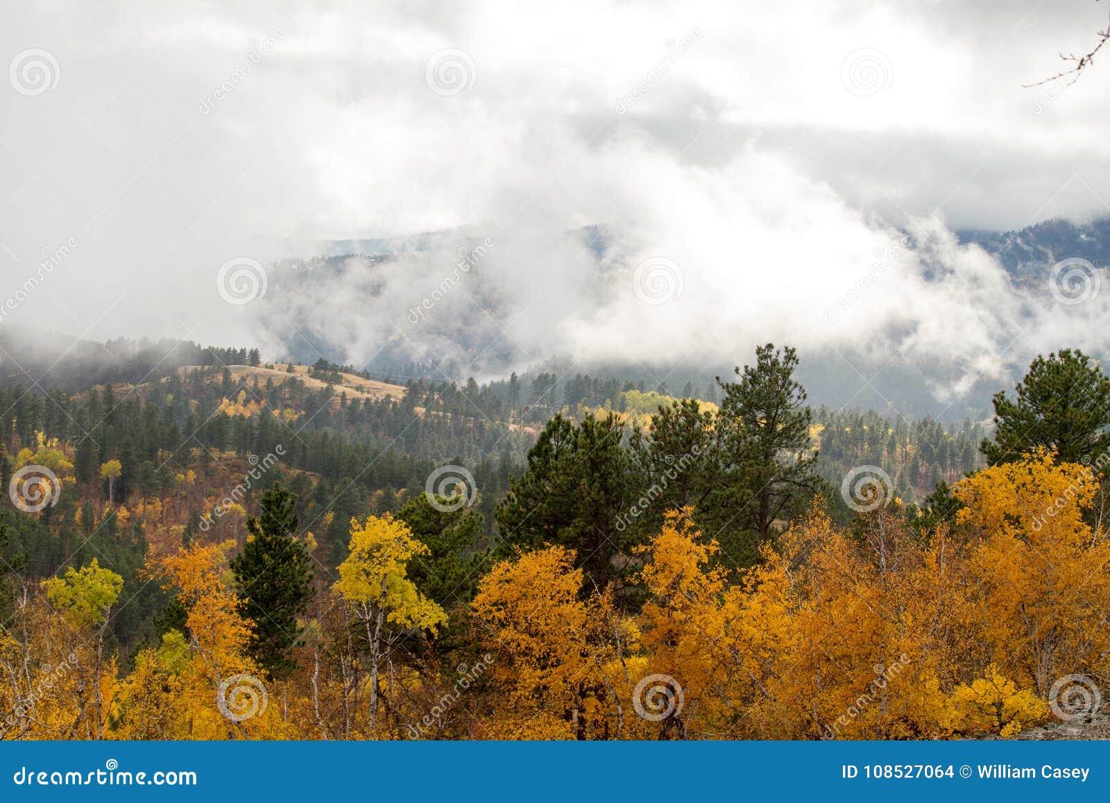 低云盖子和绿色树包括的金子