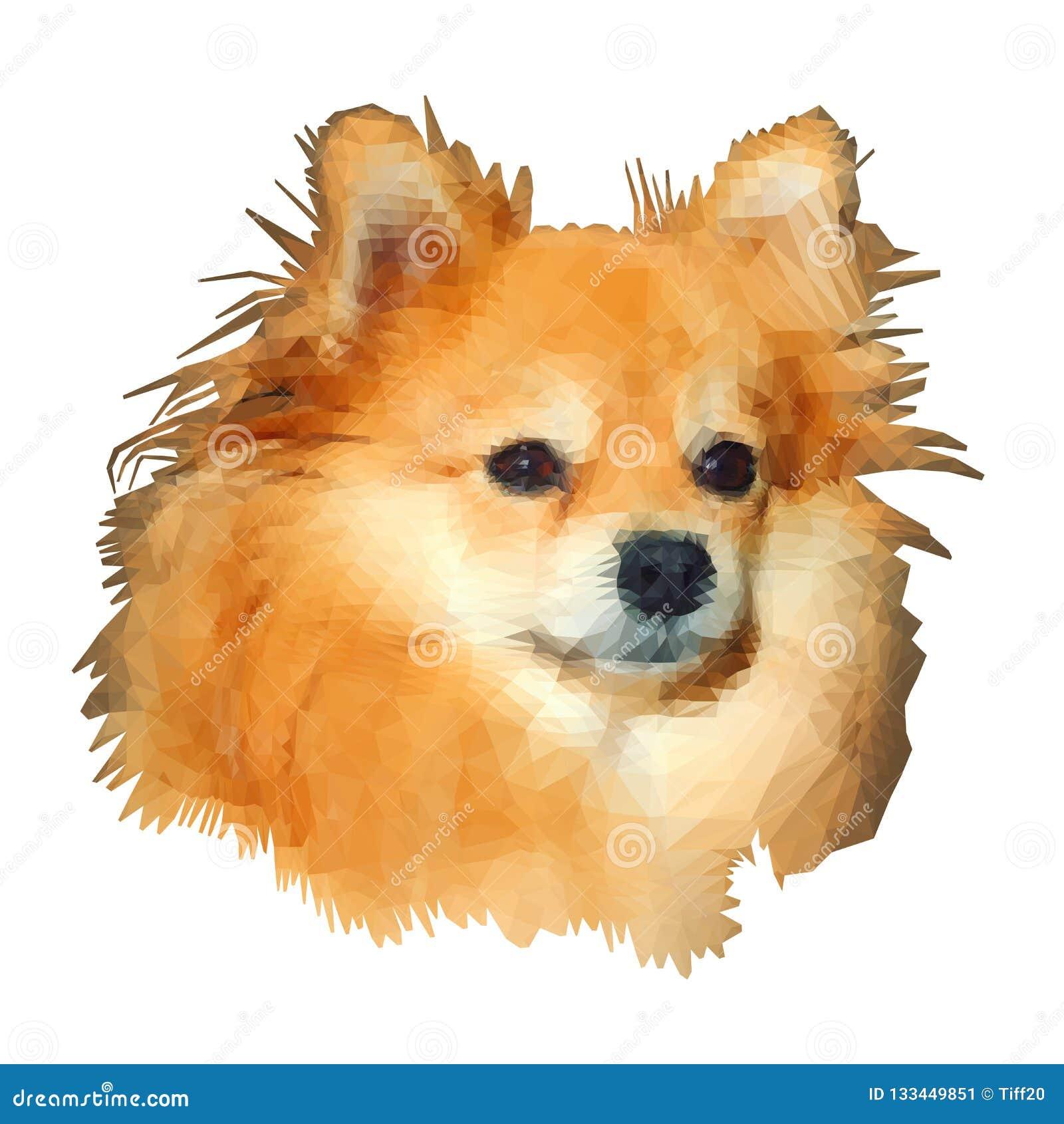 低多塑造 Pomeranian波美丝毛狗狗