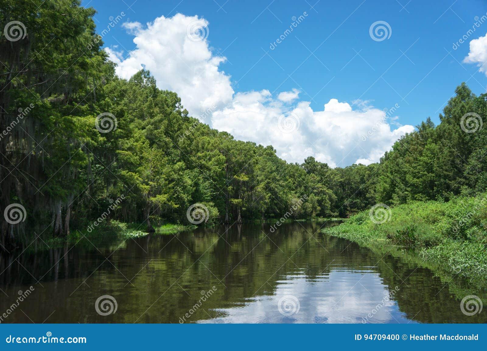 佛罗里达多沼泽的支流沼泽游览