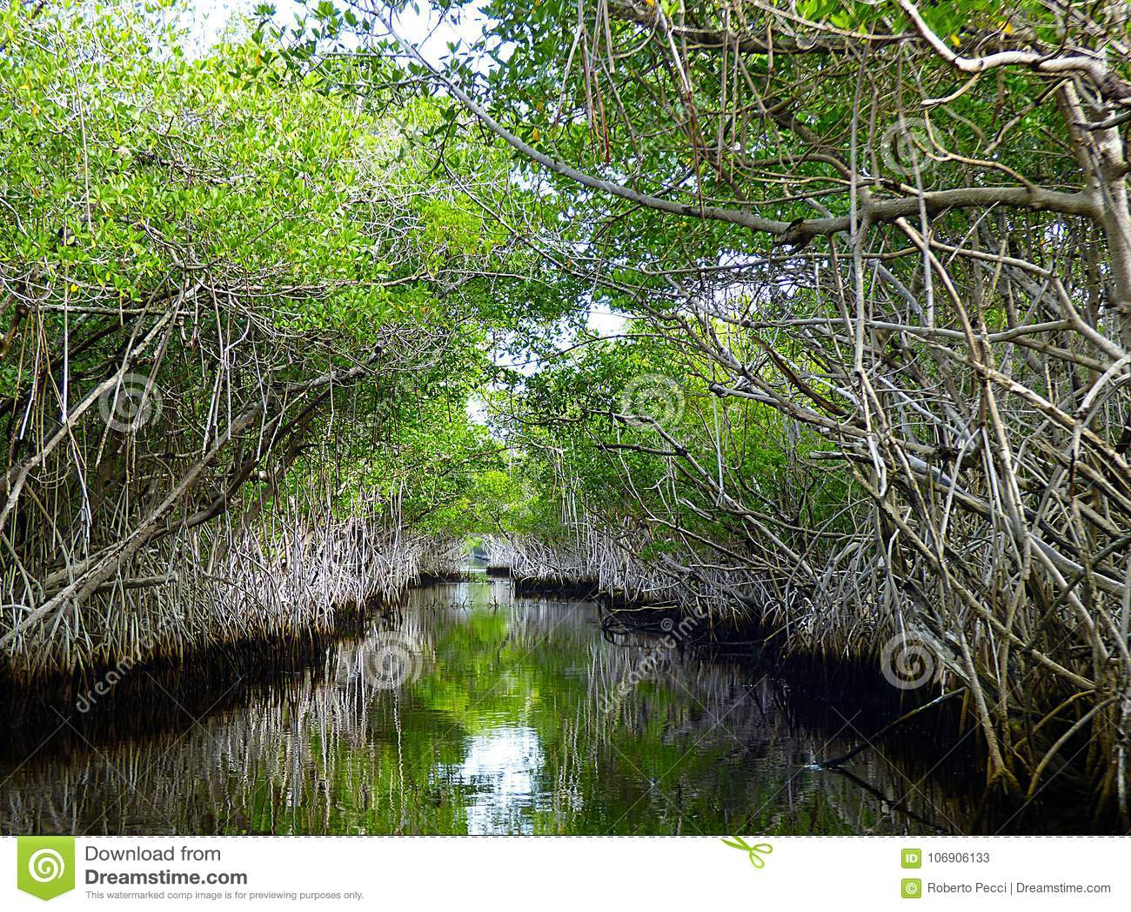 佛罗里达,沼泽地,汽船的沼泽地
