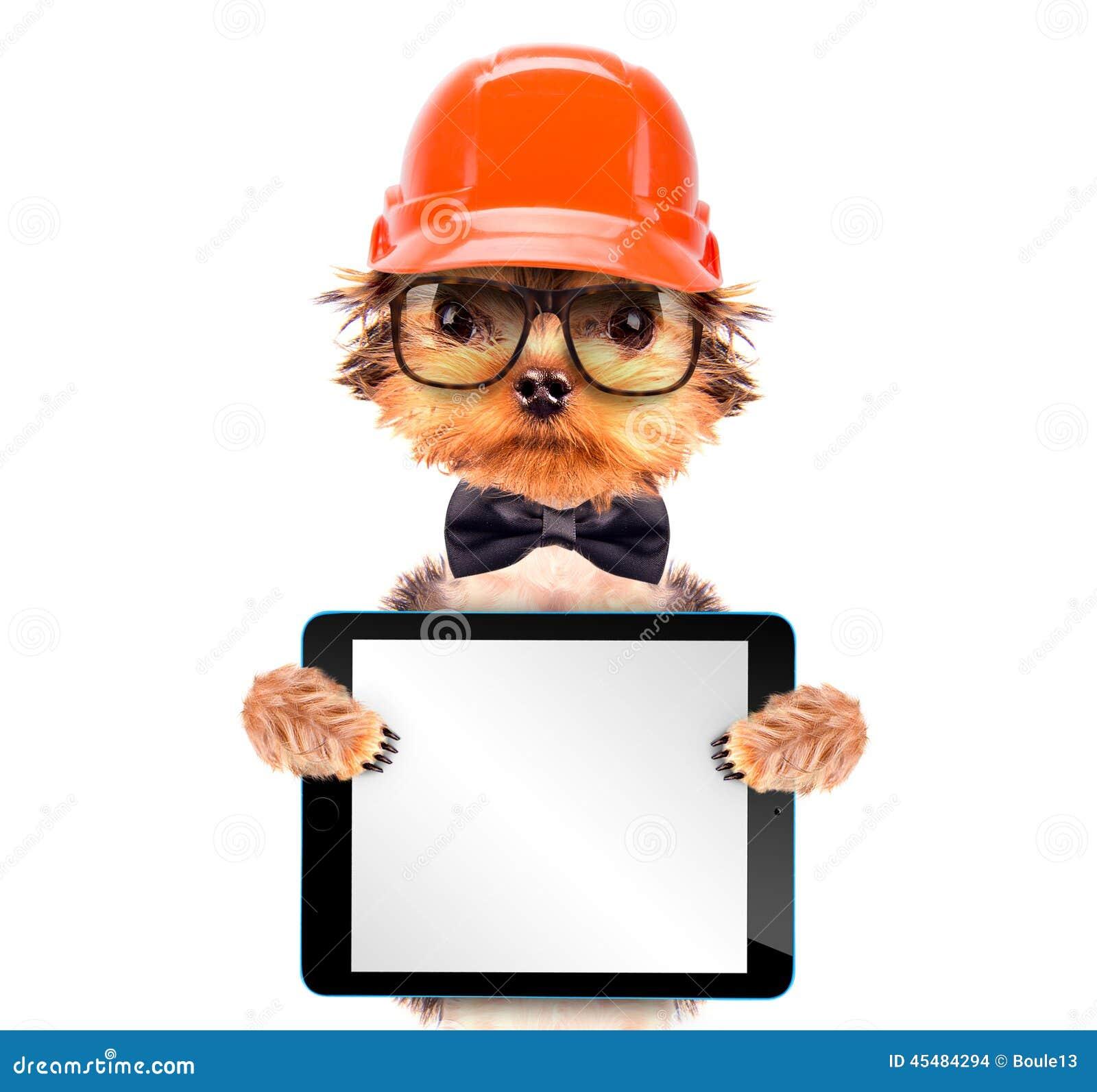 作为与片剂个人计算机的建造者穿戴的狗