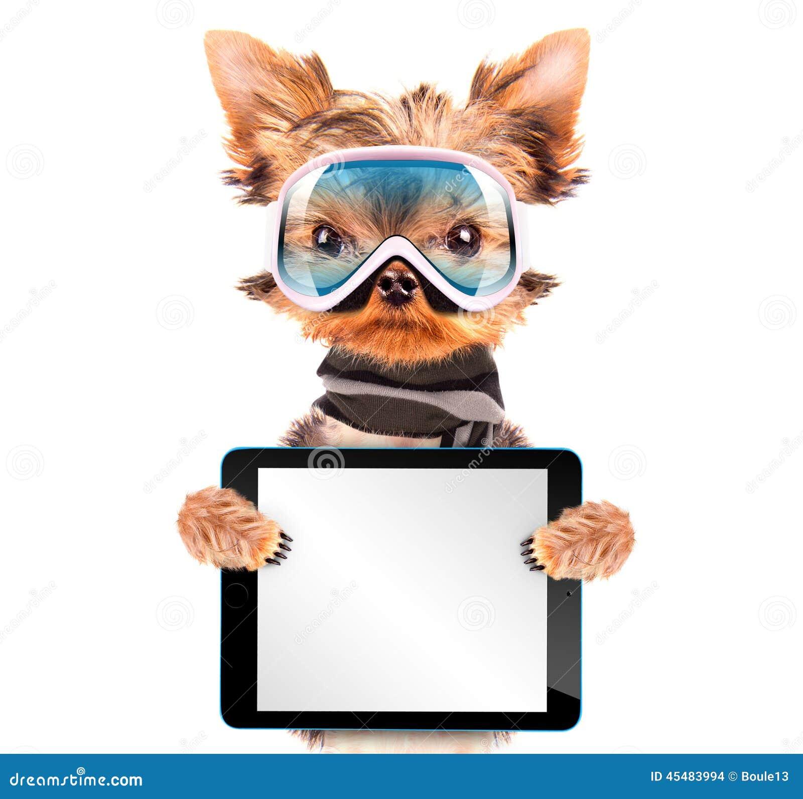 作为有片剂个人计算机的滑雪者穿戴的狗