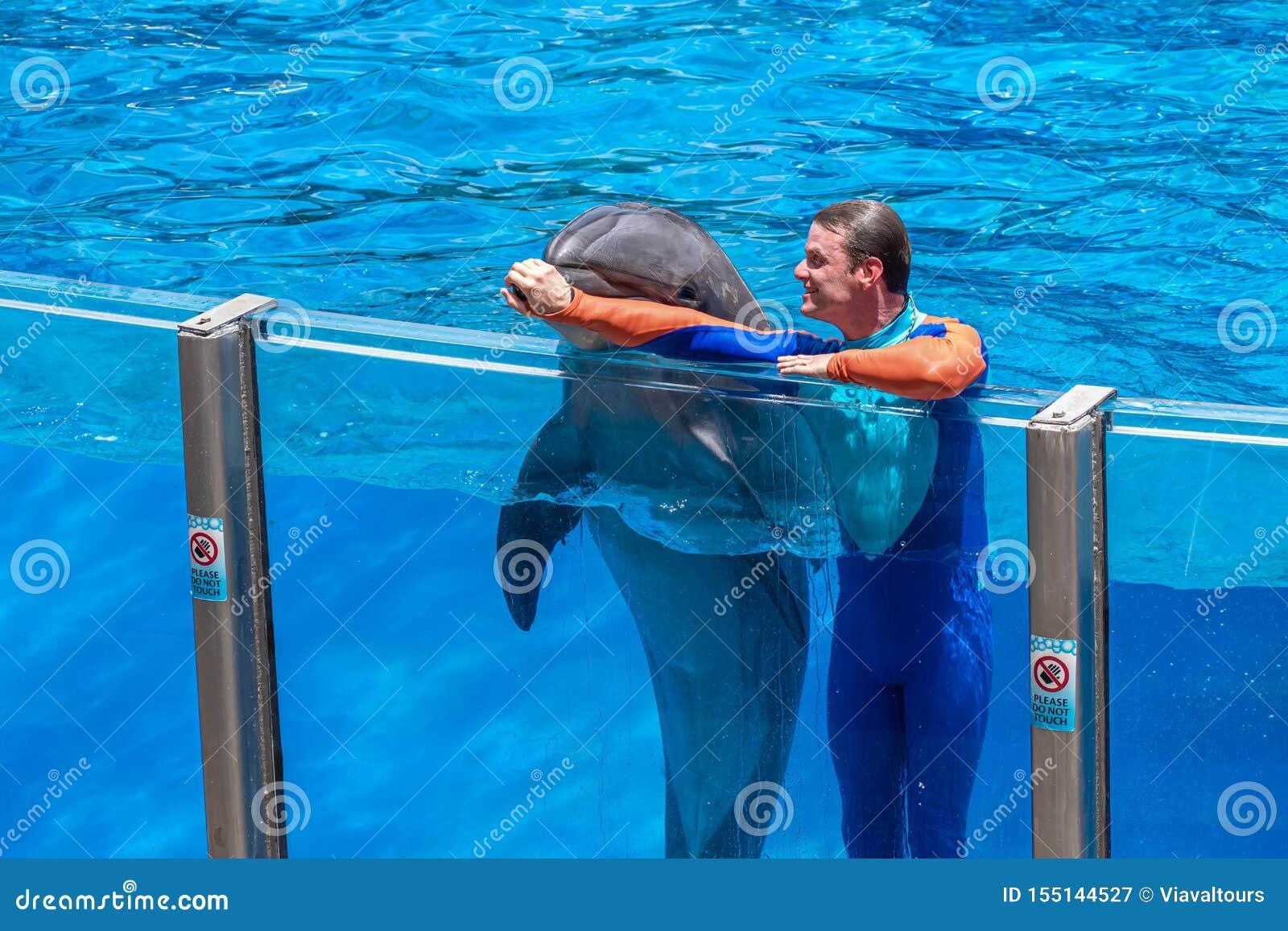 使用与讨人喜欢的海豚的鼻子的教练员在海豚天在Seaworld 2显示