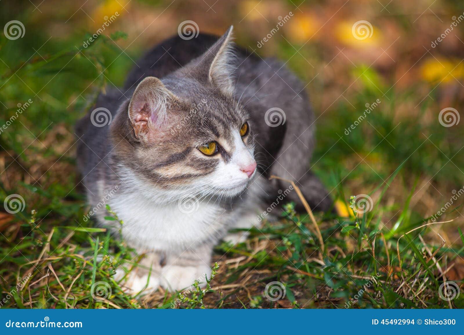 使用在草路旁的小的小猫在早晨