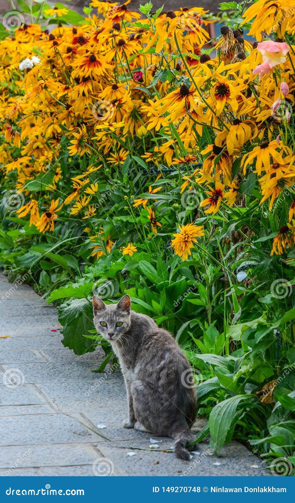 使用在雏菊花园的猫