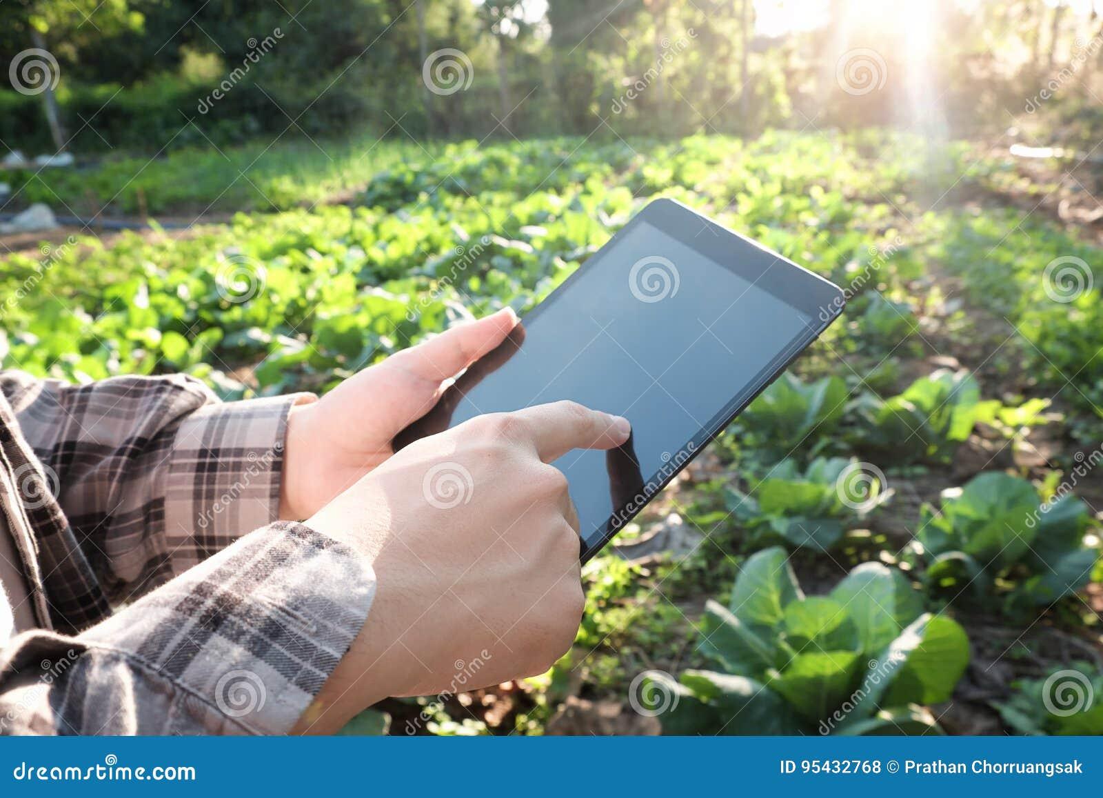 使用数字式片剂计算机的农夫在培养的农业F