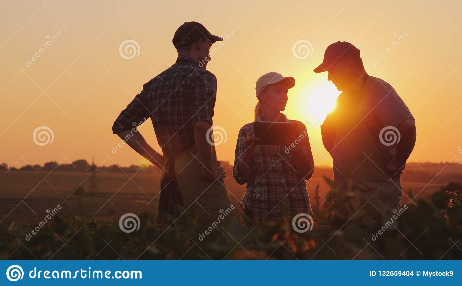 使用片剂,一个小组农夫在领域谈论, 二个男人和一名妇女 团队工作在农工联合企业中