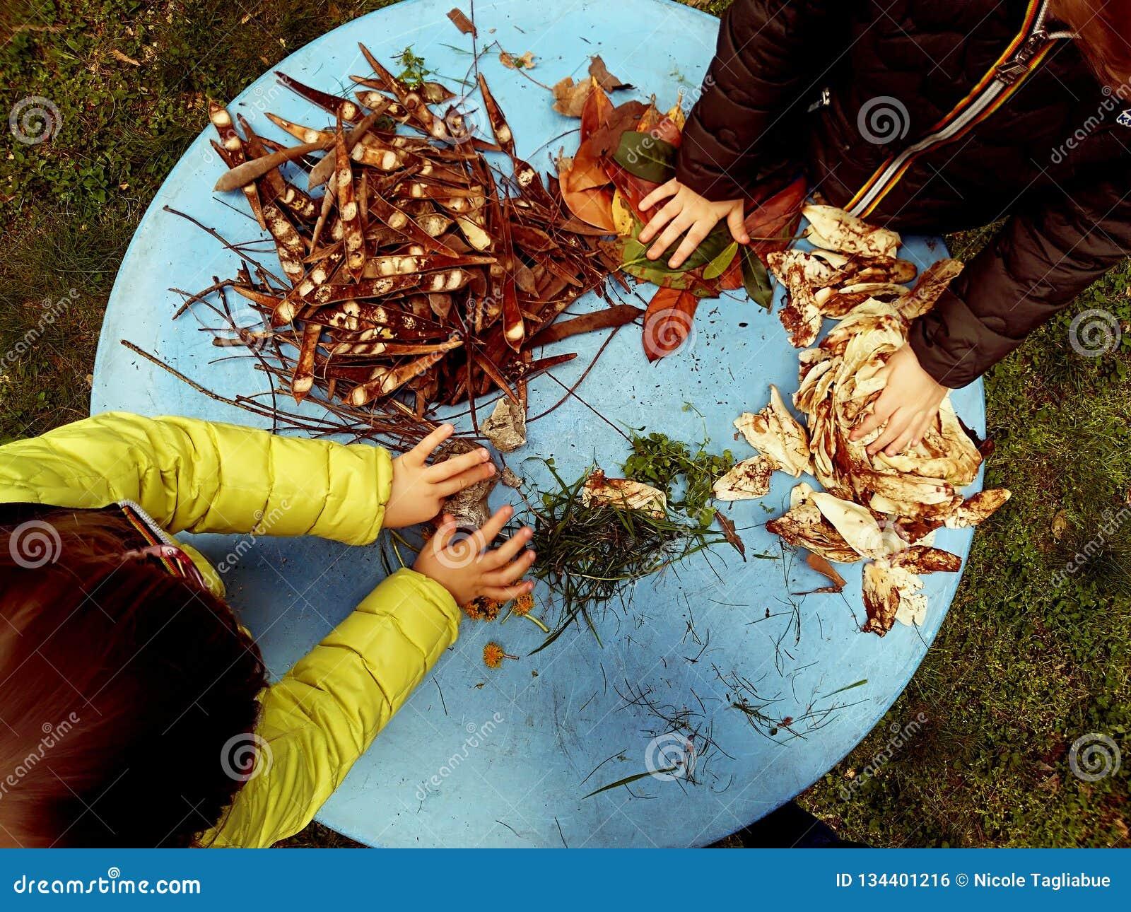 使用,expolring和从事园艺在有土壤的,叶子,坚果,棍子,植物,在学校期间的种子庭院里的小孩