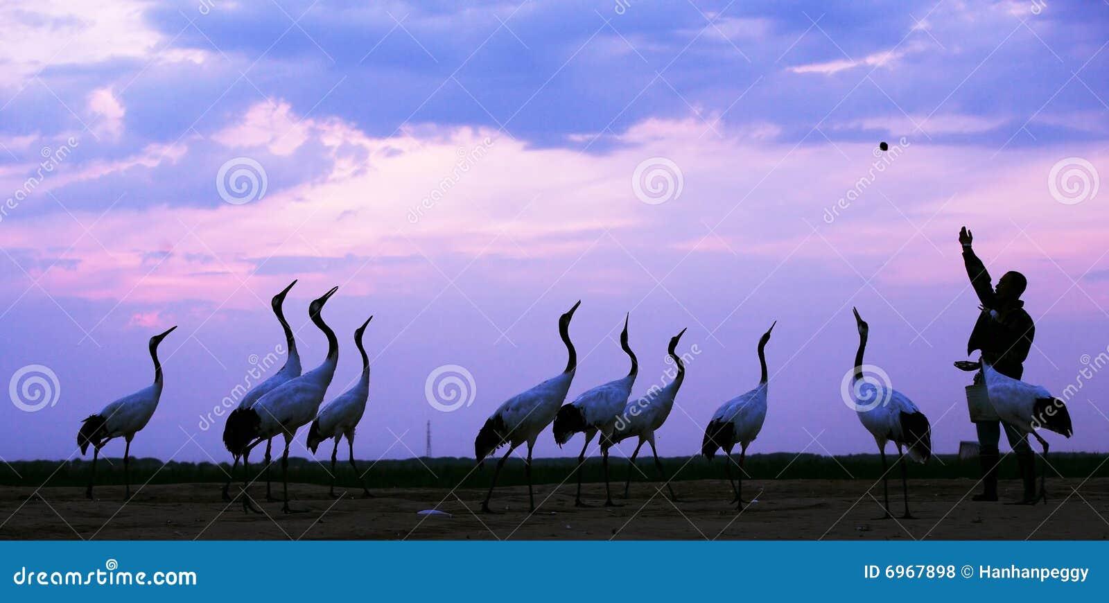 使野生生物环境美化