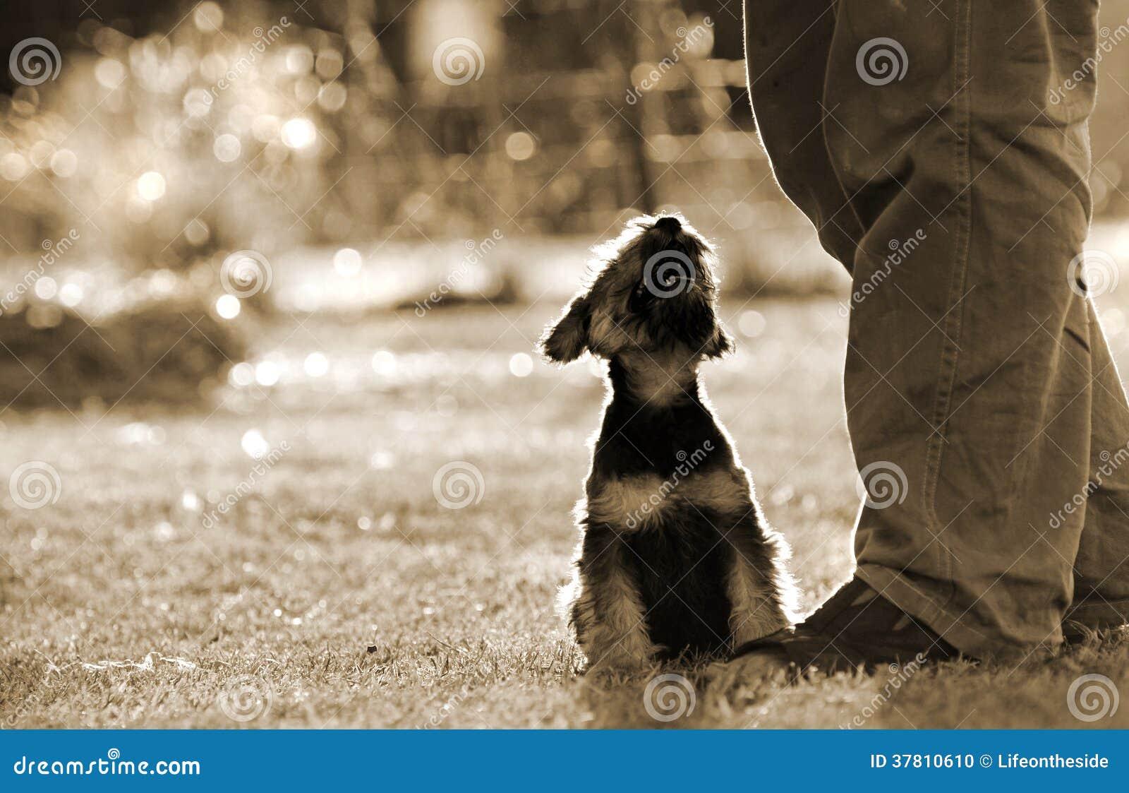 供以人员最好的朋友爱恋的小狗在所有者脚