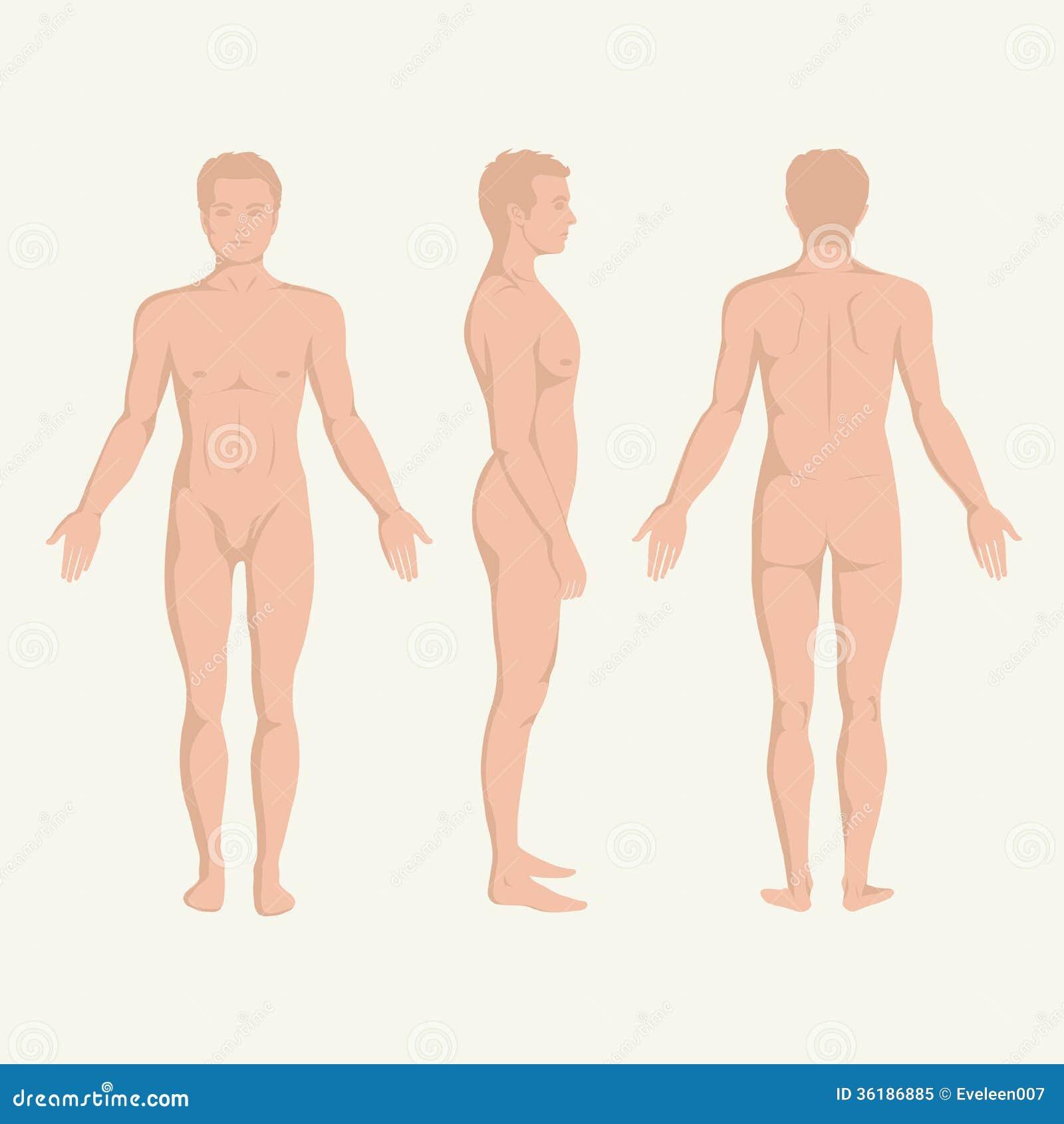 供以人员身体解剖学、前面、后面和边