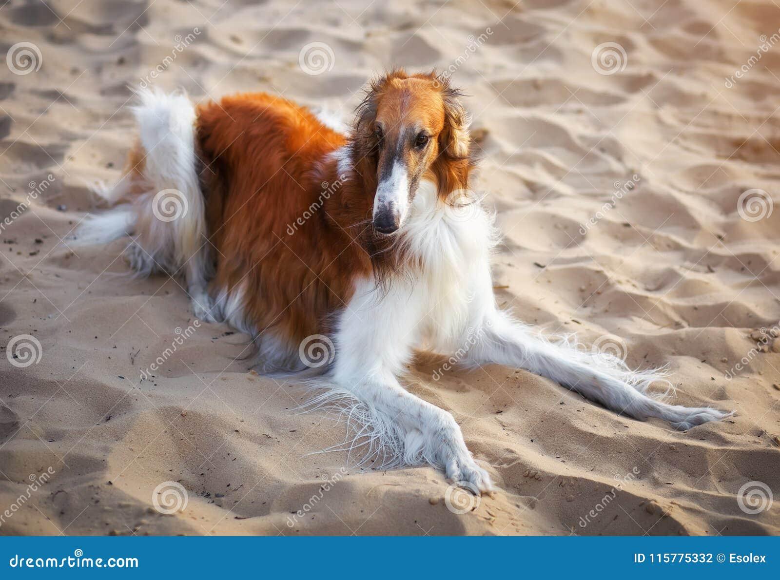 人与动物兽交系列_图片 包括有 控制, 猎人, 狩猎, 人兽交, 交配动物者 - 115775332