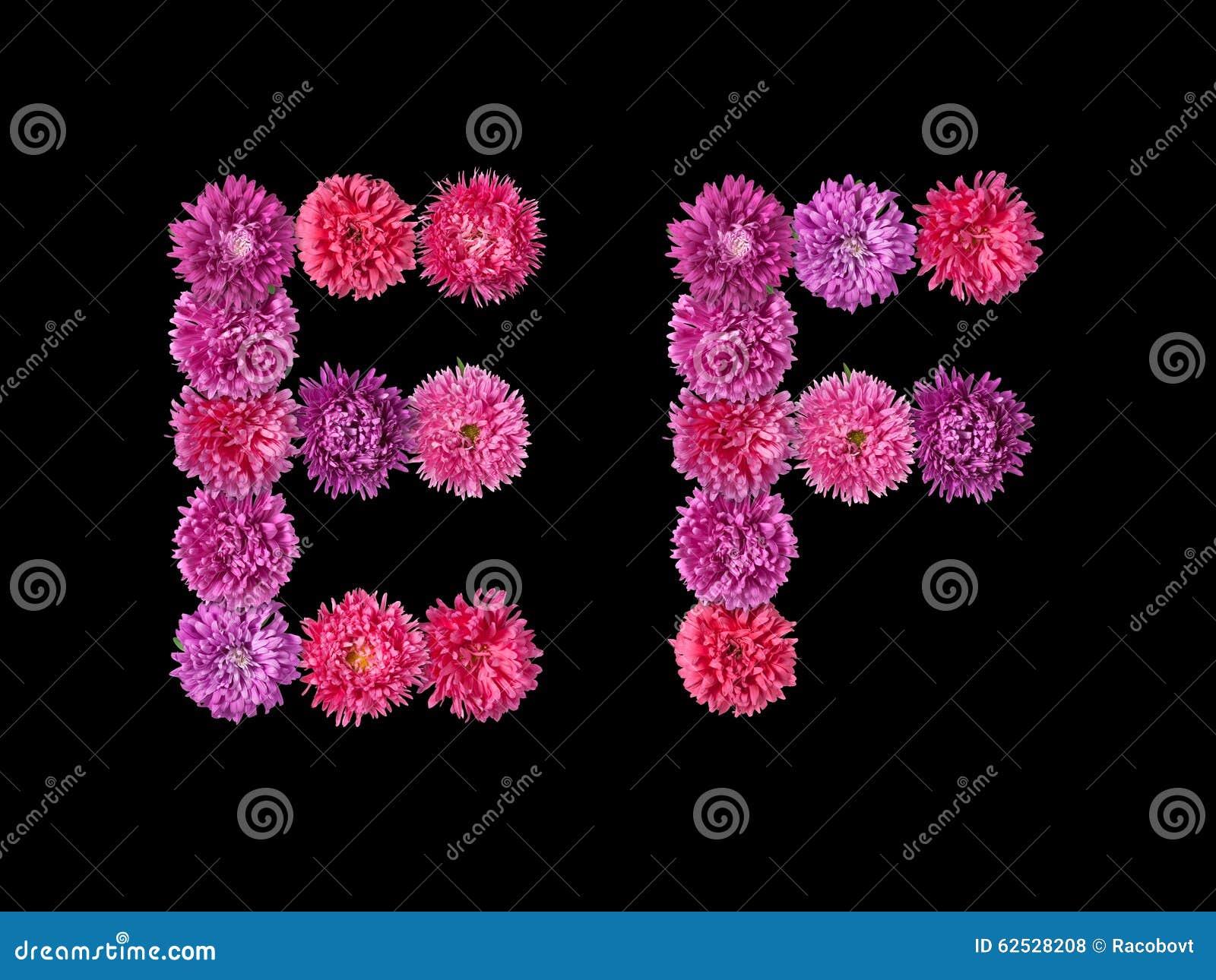 信件E,从明亮的翠菊的F