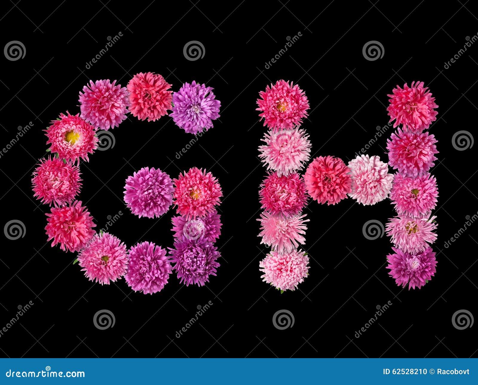 信件G,从明亮的翠菊的H