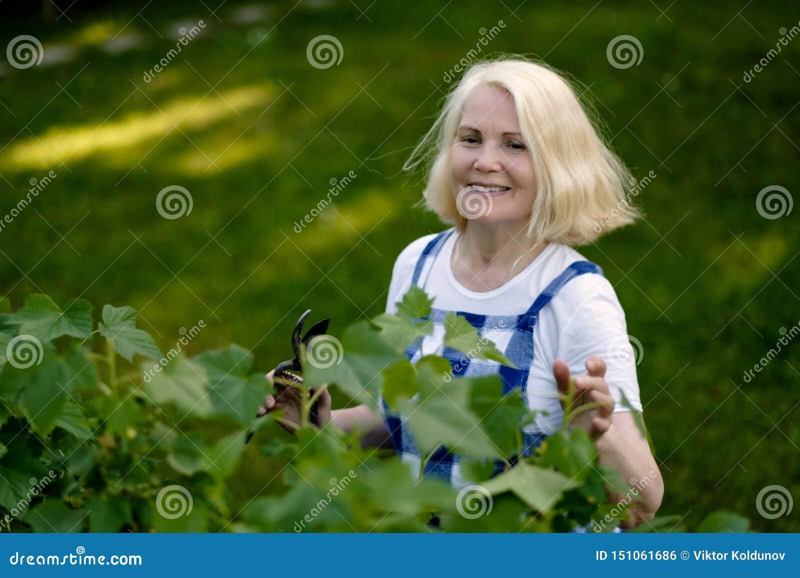 修剪在她的庭院围场的微笑的退休的妇女黑醋栗叶子