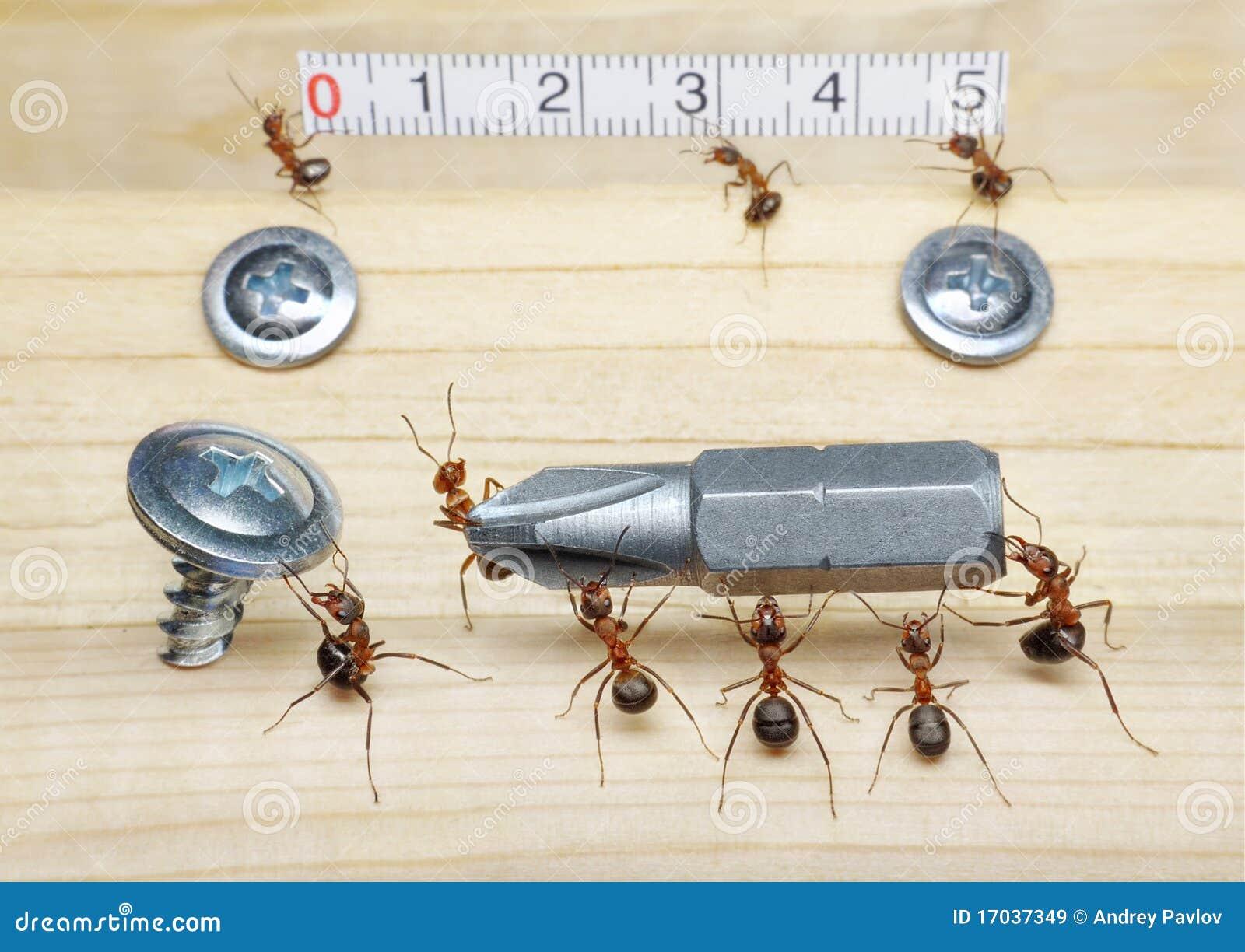 修建小组联合工作的蚂蚁