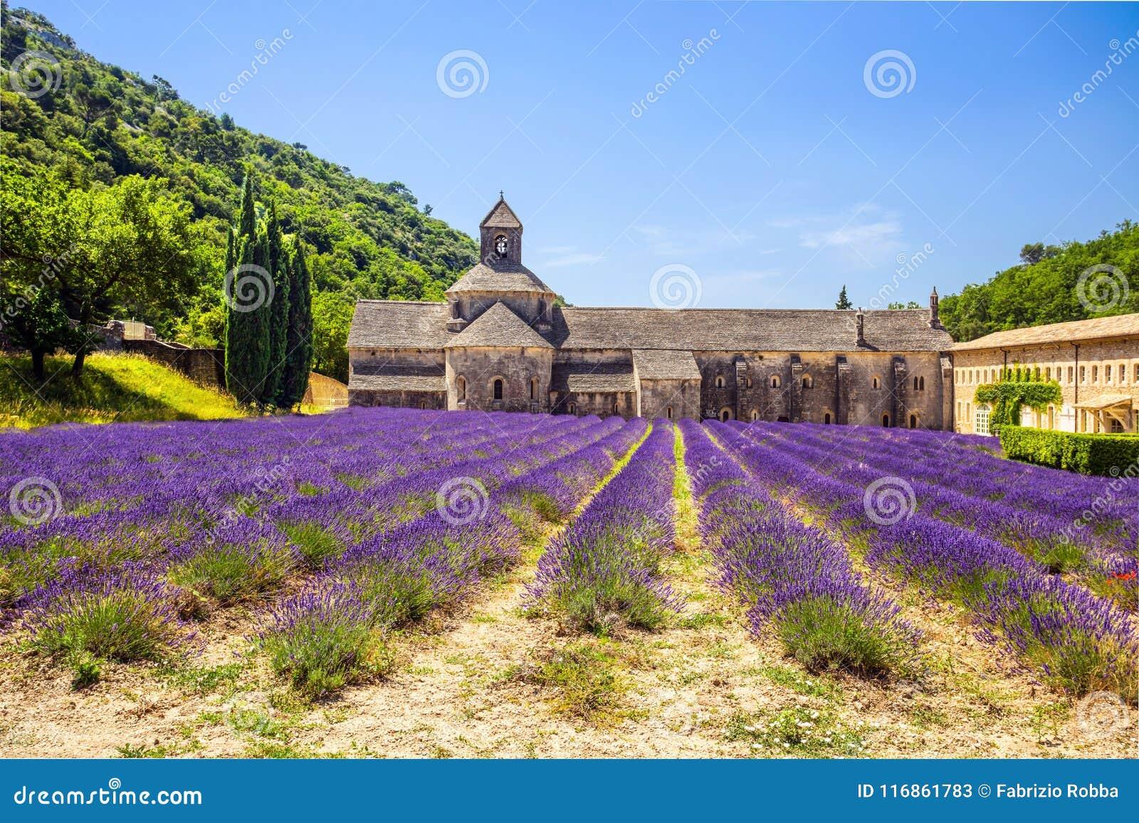 修道院开花的欧洲开花法国gordes淡紫色luberon普罗旺斯行senanque横谷 戈尔代, Luberon,横谷,普罗旺斯,法国