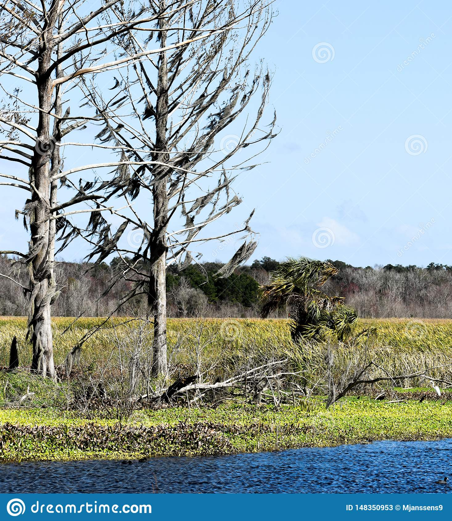 俯视一个湖和自然保护区的田园诗和平静故事书设置老树在佛罗里达