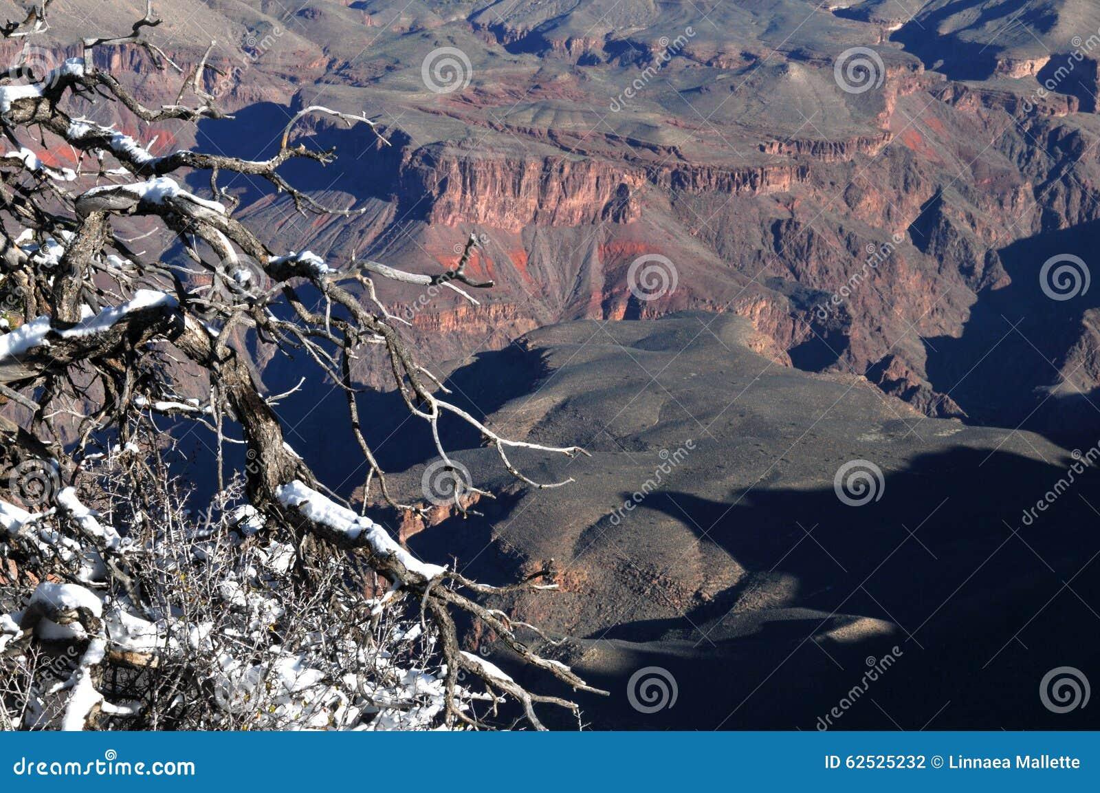 俯视大峡谷的积雪的分支