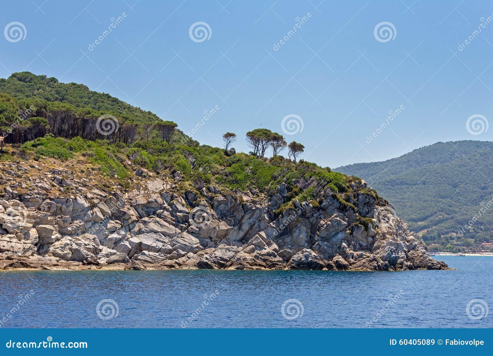 俯视海的树