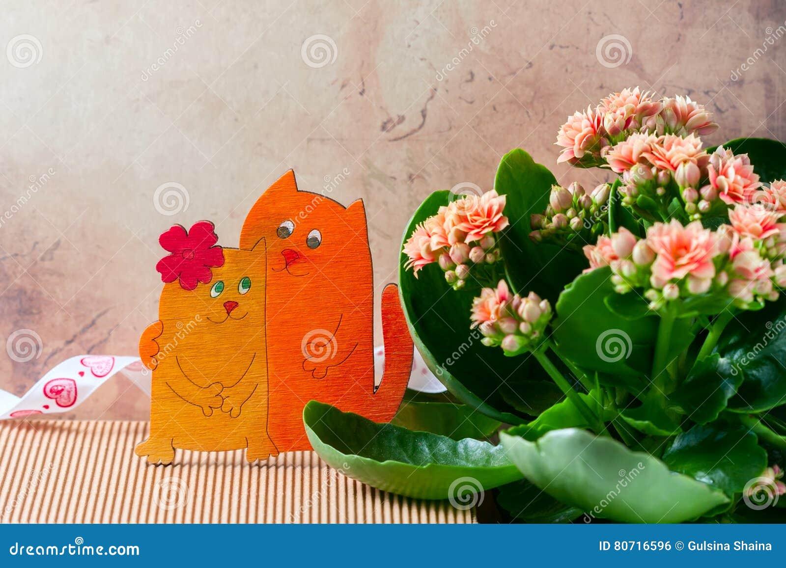 倾心的猫,华伦泰` s天 桃红色kalanchoe花