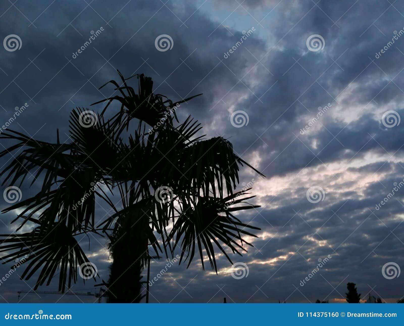 假日海滩棕榈树