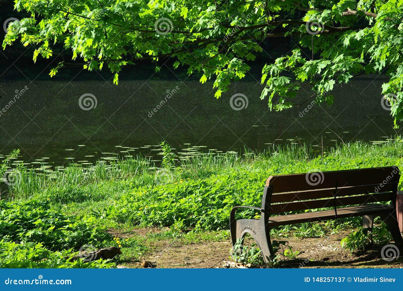 偏僻的长凳在公园