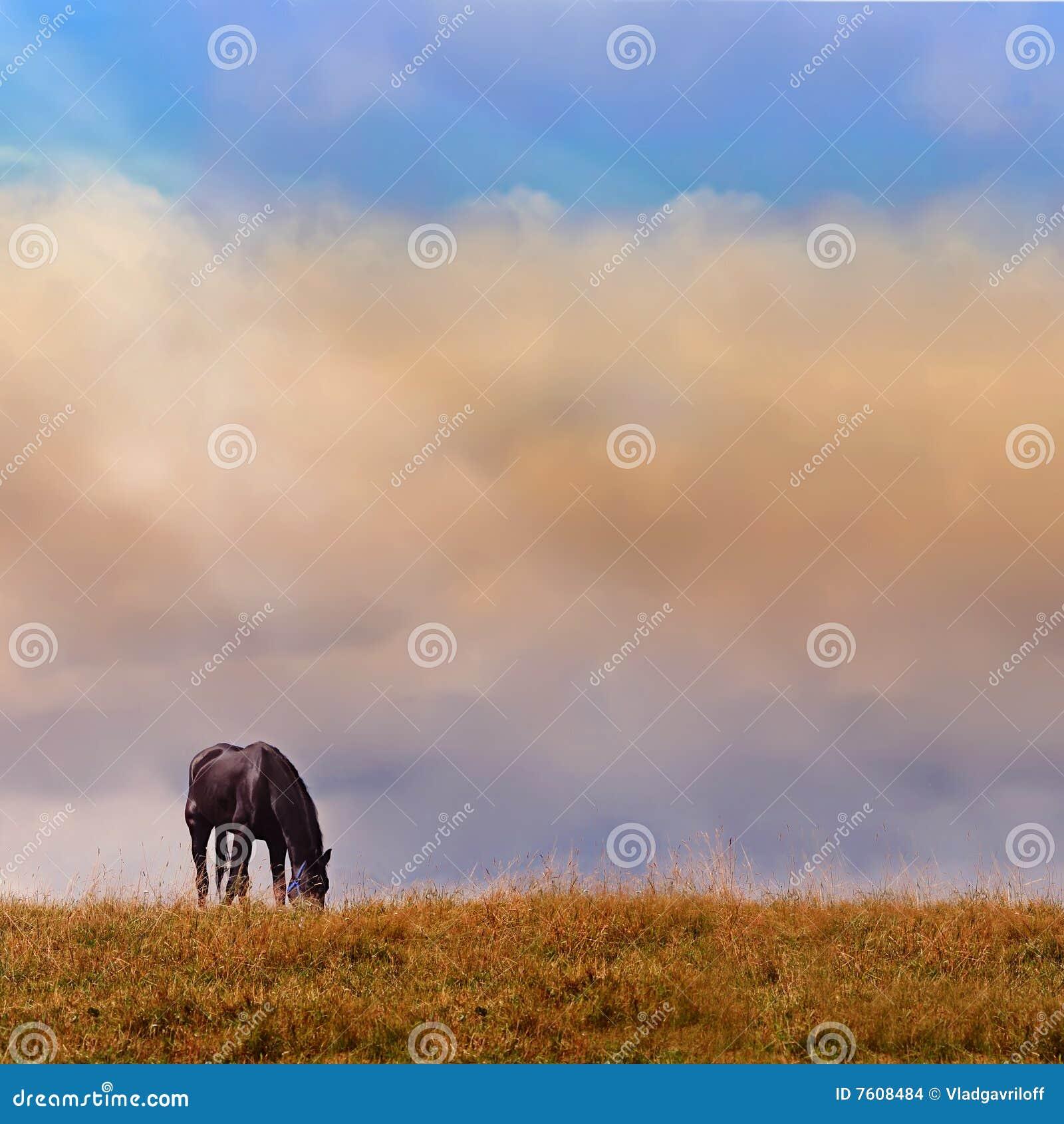 偏僻马的日志