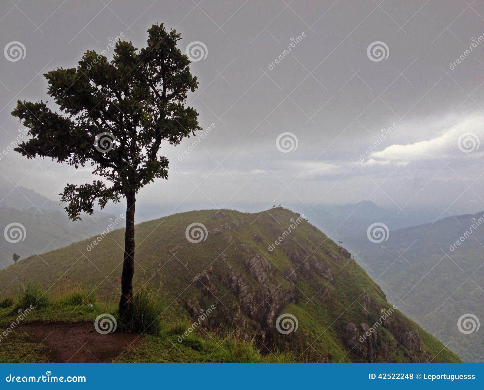 偏僻的结构树