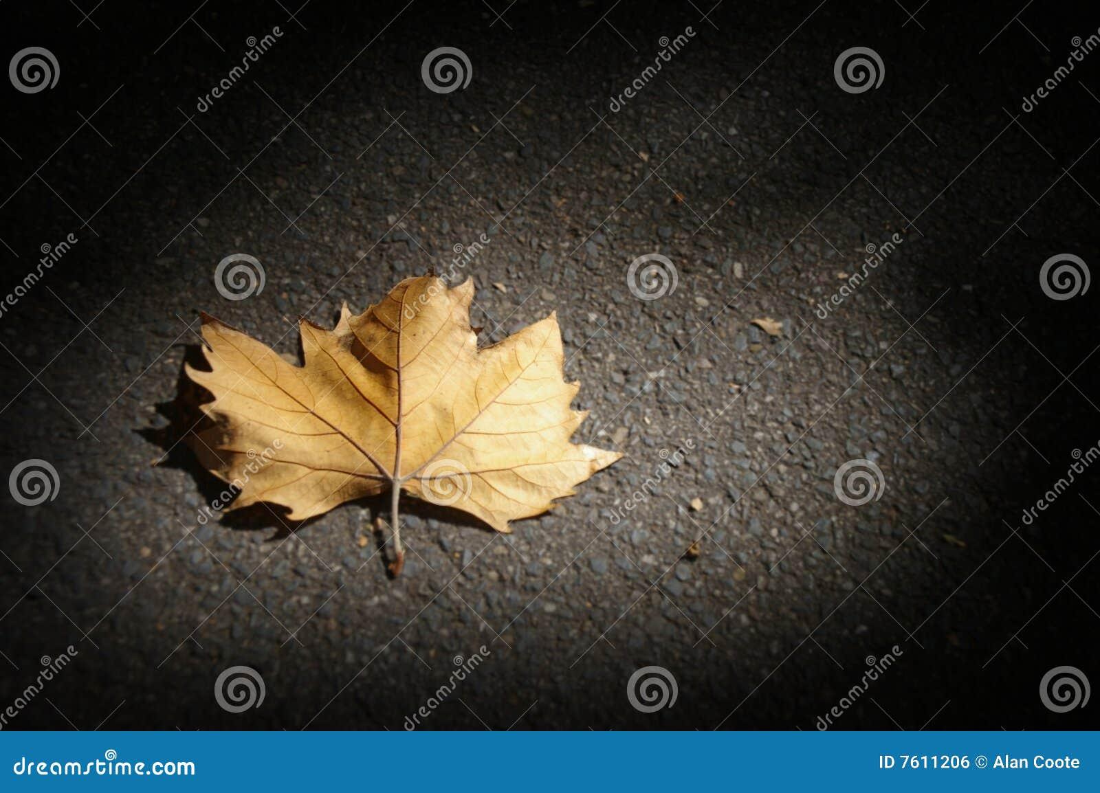 停止的叶子