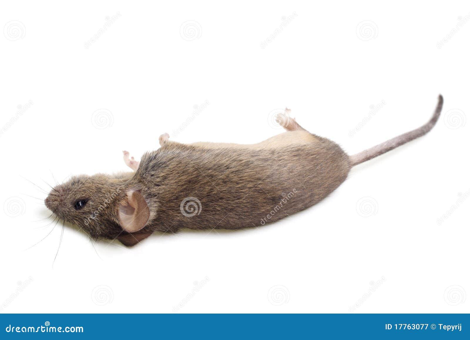 停止的鼠标