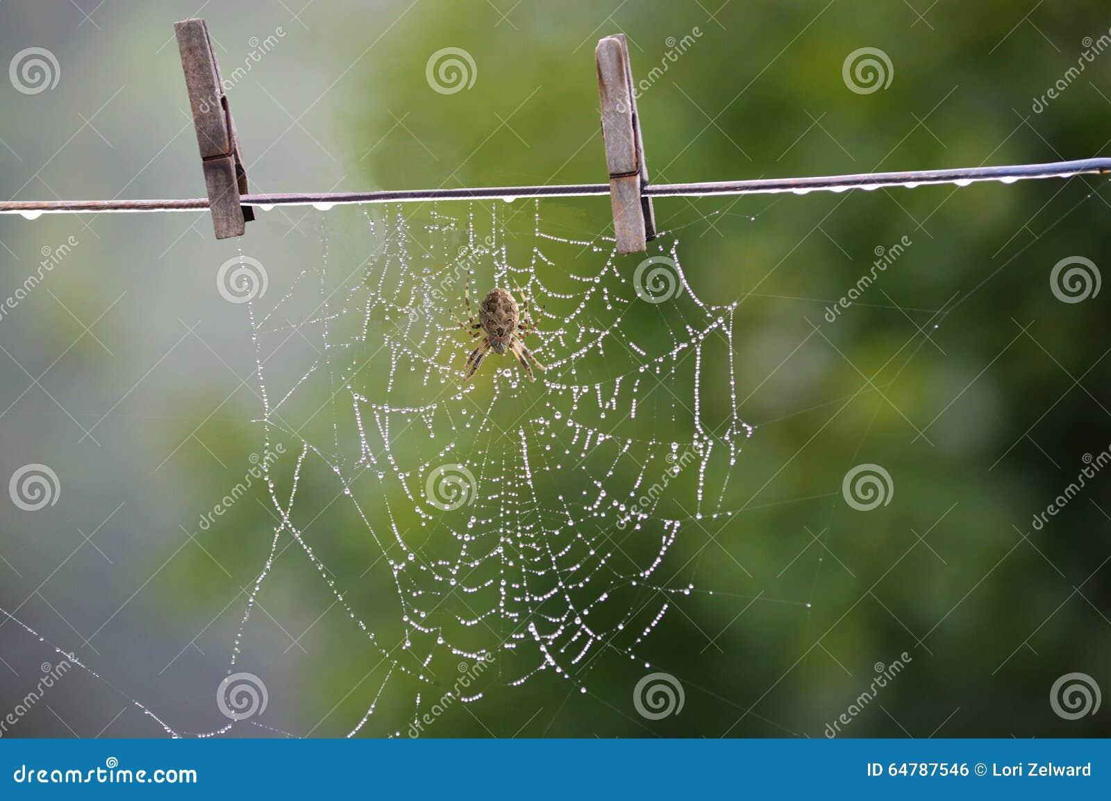 停留我的蜘蛛网烘干