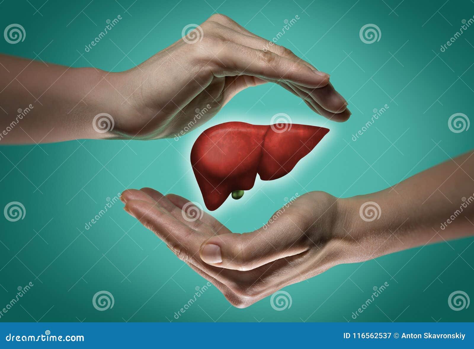 健康肝脏的概念