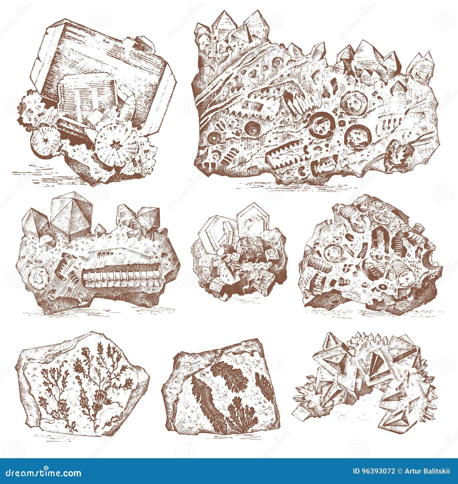 僵化的植物、石头和矿物、水晶、史前动物、考古学或者古生物学 片段化石
