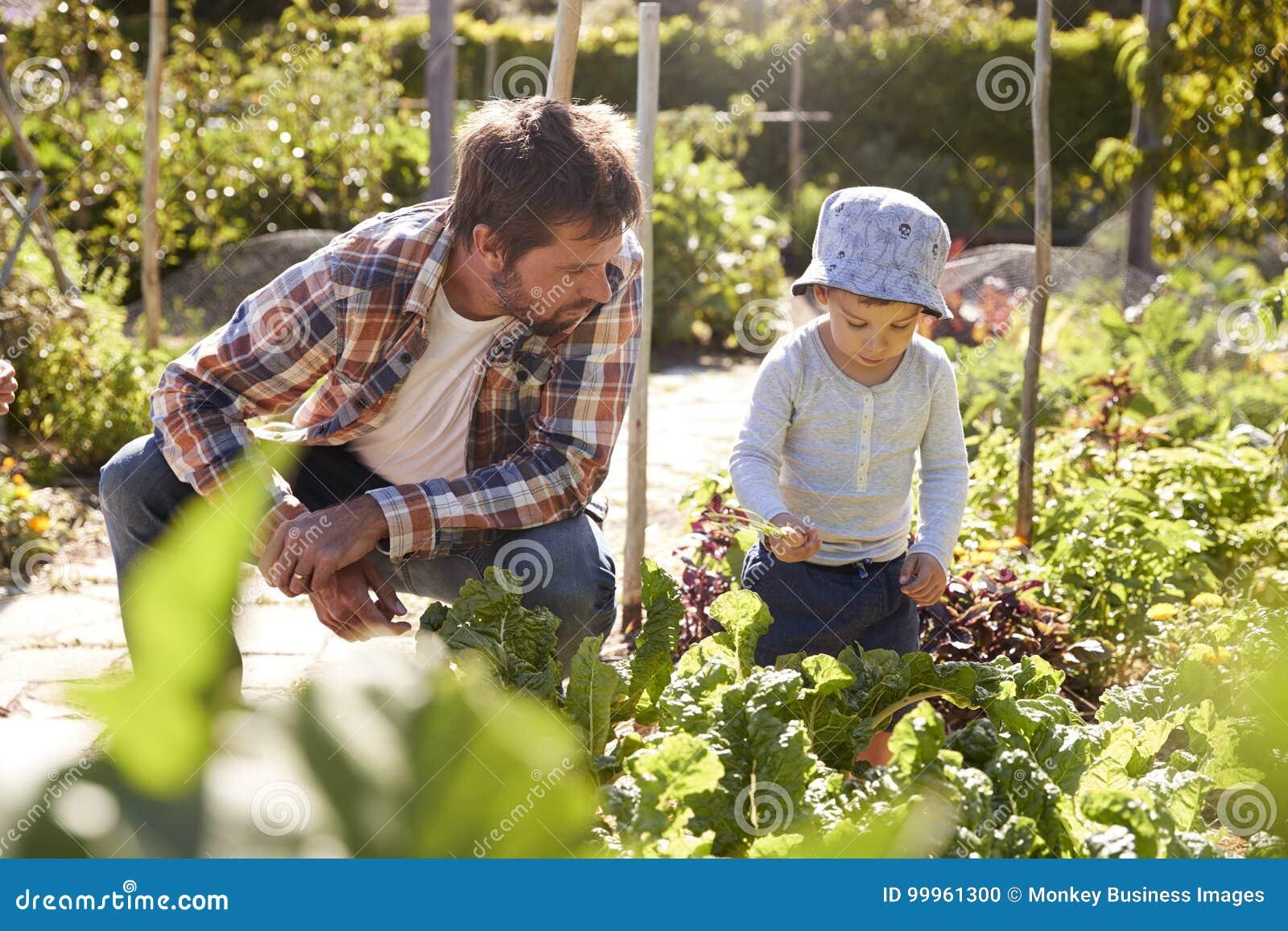 儿子帮助的父亲,他们在分配地段
